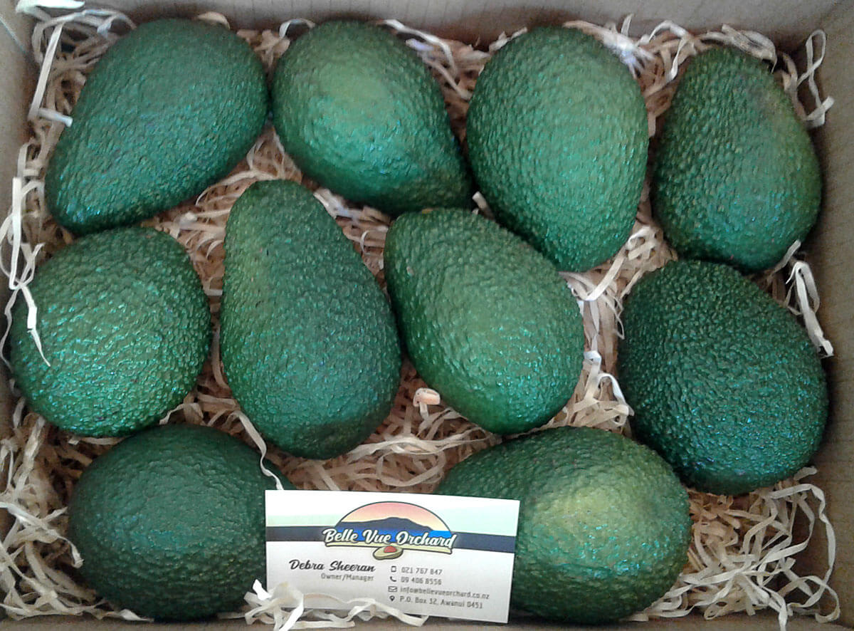FRESH HASS AVOCADOS