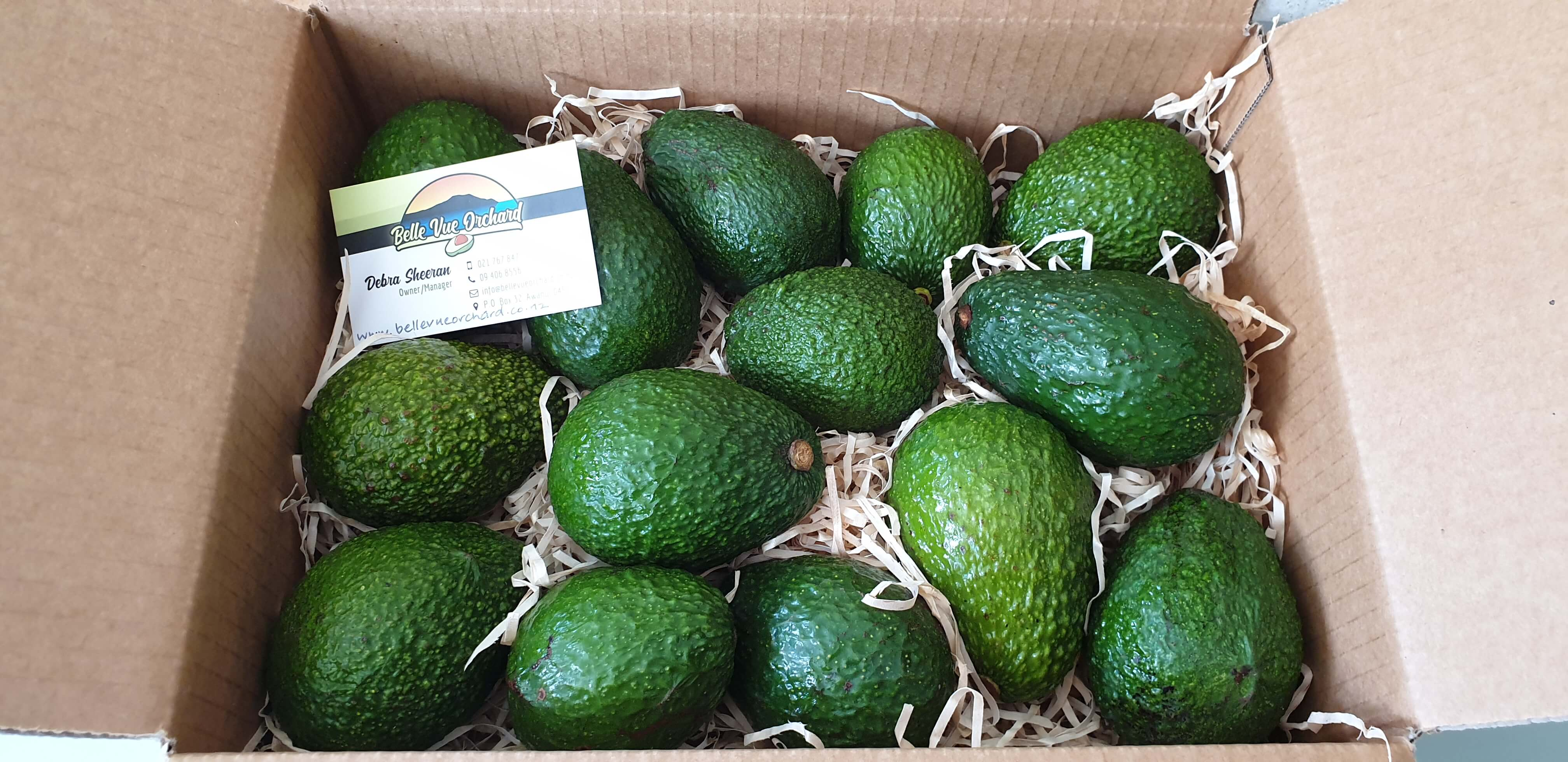 FRESH HASS AVOCADOS (SMALL)